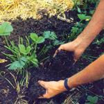 agroecologia3